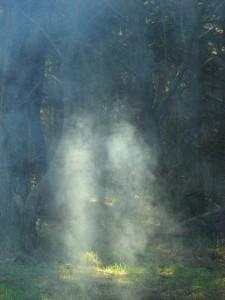 Smoke in sunlight